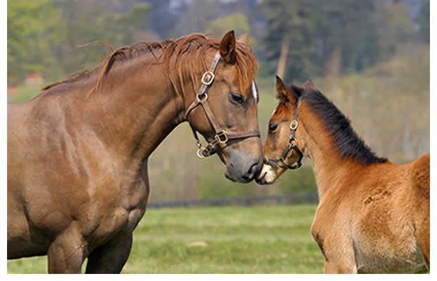 Newmarket National Stud & Heritage with buffet lunch. Tuesday 30th April.