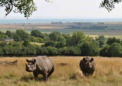 The Romney Marsh Rhinos: Thursday 27th August.